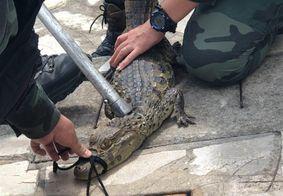 Animal foi resgatado por equipes da Polícia