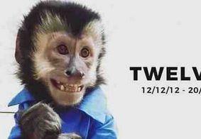 Latino ganhará de presente diamante feito com cinzas do macaco Twelves