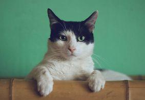 Festa para comemorar aniversário de gato provoca surto de Covid-19