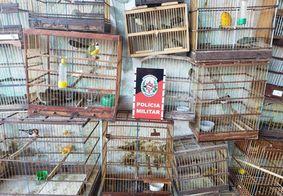 Mais de 50 aves são apreendidas durante operação contra tráfico de animais silvestres na Paraíba
